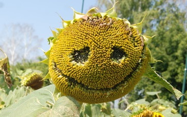 Znajdź Naturalny Uśmiech
